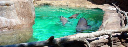 Indianapolis Zoo - Sea Lions Exhibit