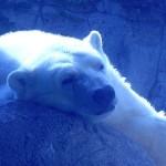 Make Holiday Memories at the Indianapolis Zoo